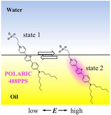 油水界面でのPOLARIC™ 488PPSの界面電位に依存する吸着状態変化。